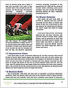 0000077910 Word Template - Page 4