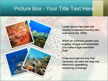 0000077980 PowerPoint Templates - Slide 23