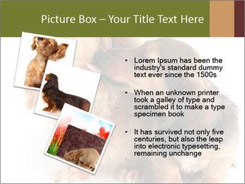 0000078016 PowerPoint Templates - Slide 17