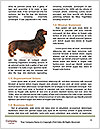 0000078016 Word Template - Page 4