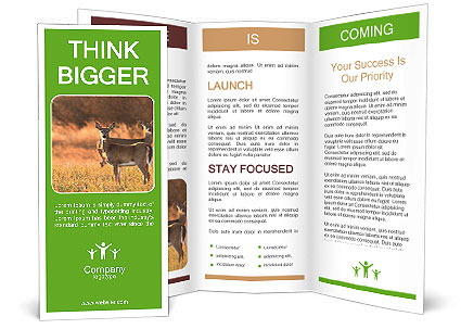 0000078039 Brochure Templates