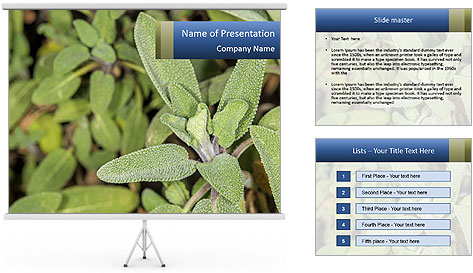 0000078074 PowerPoint Template
