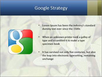 0000078074 PowerPoint Template - Slide 10