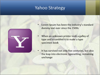 0000078074 PowerPoint Template - Slide 11