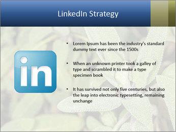 0000078074 PowerPoint Template - Slide 12
