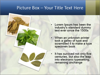 0000078074 PowerPoint Template - Slide 17