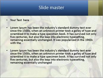 0000078074 PowerPoint Template - Slide 2