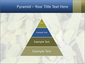 0000078074 PowerPoint Template - Slide 30