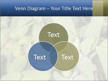 0000078074 PowerPoint Template - Slide 33