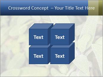 0000078074 PowerPoint Template - Slide 39