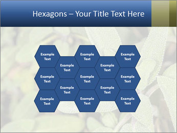 0000078074 PowerPoint Template - Slide 44