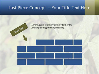0000078074 PowerPoint Template - Slide 46