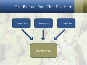 0000078074 PowerPoint Template - Slide 70