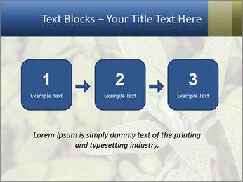 0000078074 PowerPoint Template - Slide 71