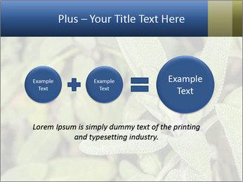 0000078074 PowerPoint Template - Slide 75