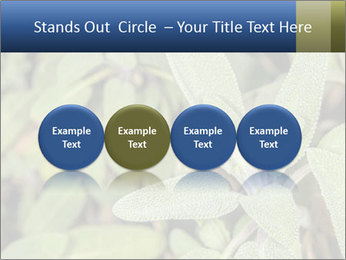 0000078074 PowerPoint Template - Slide 76
