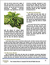 0000078074 Word Template - Page 4