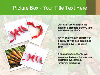 0000078088 PowerPoint Template - Slide 23