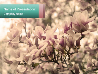 0000078096 PowerPoint Template