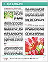 0000078096 Word Template - Page 3