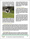 0000078134 Word Templates - Page 4