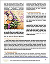 0000078181 Word Template - Page 4