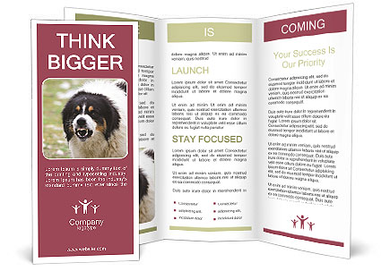 0000078182 Brochure Template