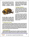 0000078193 Word Templates - Page 4