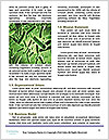 0000078207 Word Template - Page 4