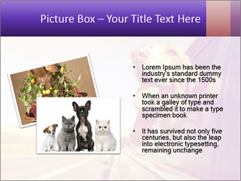 0000078281 PowerPoint Templates - Slide 20
