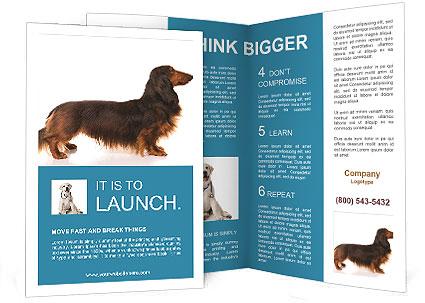 0000078311 Brochure Templates