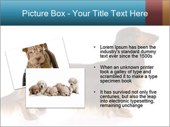 0000078311 PowerPoint Templates - Slide 20