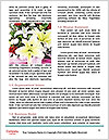 0000078315 Word Template - Page 4
