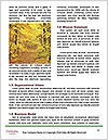 0000078319 Word Templates - Page 4