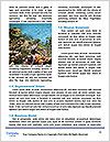 0000078394 Word Templates - Page 4