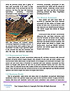 0000078434 Word Template - Page 4