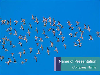 0000078457 PowerPoint Template - Slide 1
