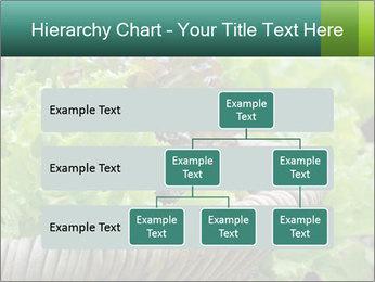 0000078482 PowerPoint Template - Slide 67