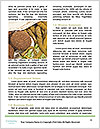 0000078510 Word Templates - Page 4