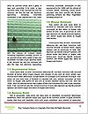 0000078511 Word Template - Page 4