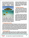 0000078522 Word Template - Page 4