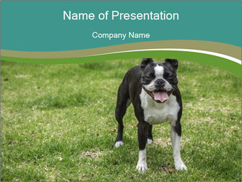 0000078544 PowerPoint Templates - Slide 1