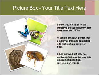 0000078621 PowerPoint Template - Slide 23