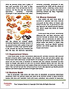 0000078626 Word Templates - Page 4