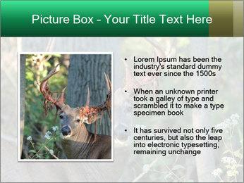 0000078638 PowerPoint Template - Slide 13