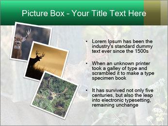 0000078638 PowerPoint Template - Slide 17
