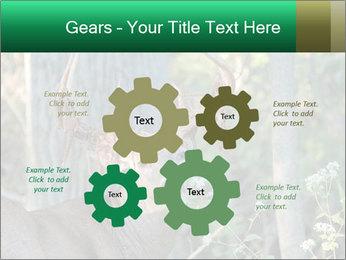 0000078638 PowerPoint Template - Slide 47