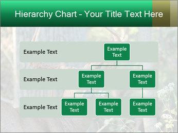0000078638 PowerPoint Template - Slide 67