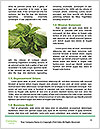 0000078649 Word Template - Page 4