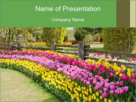 0000078653 PowerPoint Templates